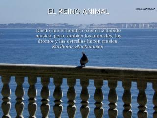 Reino Animal.pps