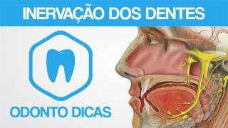 ROTEIRO INERVACAO DOS DENTES.pdf