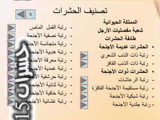 رتبة عديمة الأجنحة.pdf